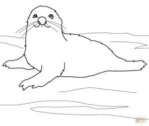 Детёныш гренландского тюленя