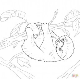 Детёныш ленивца