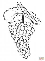 Виноградное гроно