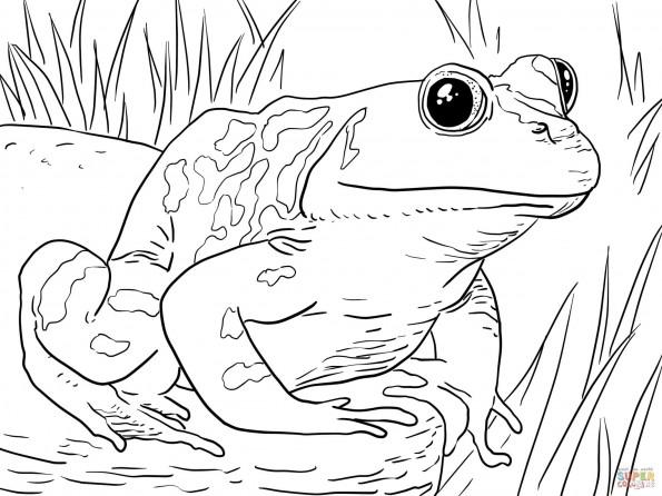 Раскраска Американская лягушка, распечатать или скачать из ...