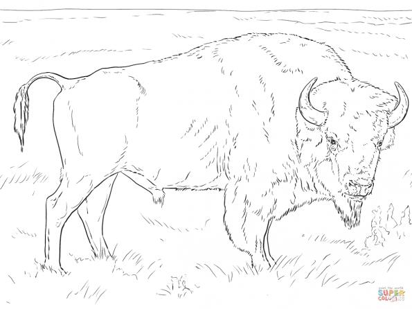 Раскраска Реалистичный американский бизон, распечатать или ...