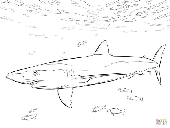 Раскраска Синяя акула, распечатать или скачать из ...