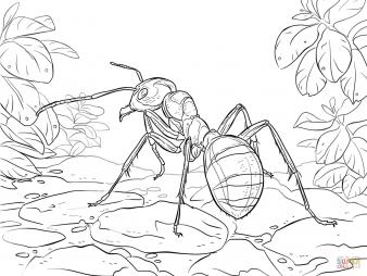 Малый лесной муравей