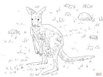 Гигантский кенгуру