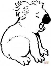 Плачущая коала