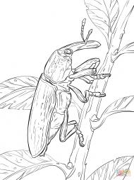 Желтый жук-долгоносик