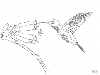Колибри