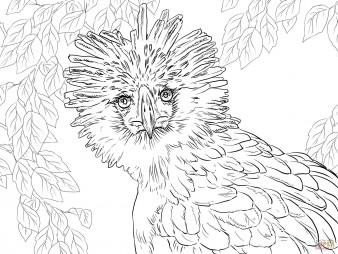 Портрет филиппинского орла