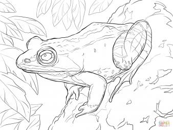 Лесная лягушка