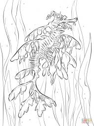 Реалистичный морской конёк-тряпичник