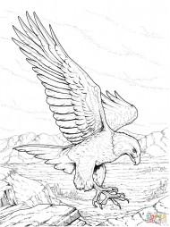 Североамериканский белоголовый орлан