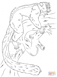 Вильчатополосый лемур