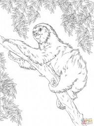 Двупалый ленивец на дереве