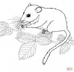 Мышь ест ягоды