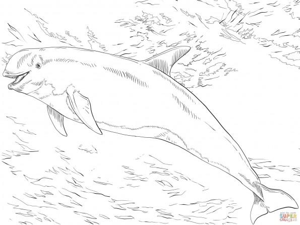 Раскраска Серый дельфин, распечатать или скачать из ...