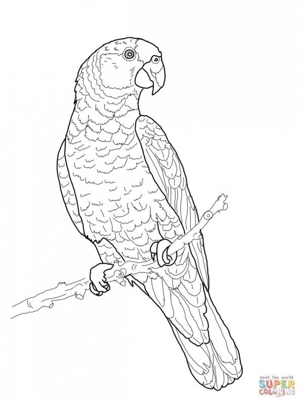 раскраска попугай императорский амазон распечатать или