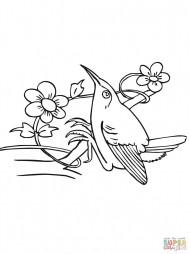 Сидящий колибри