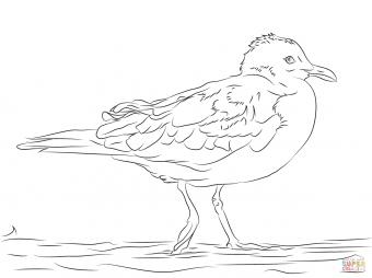 Делавэрская чайка