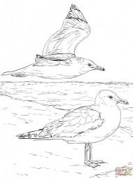 Две калифорнийские чайки