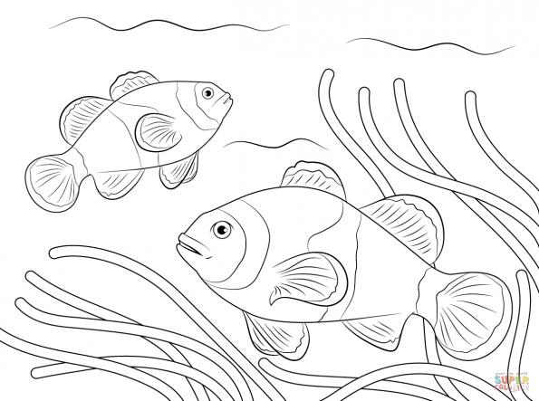 раскраска анемоновая рыба клоун распечатать или скачать из