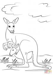 Милый кенгуру с дитенышем