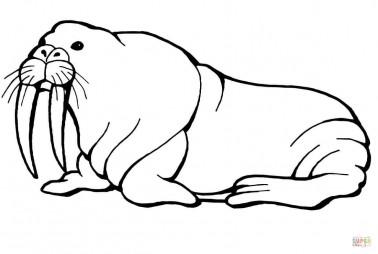 Морж с длинными клыками