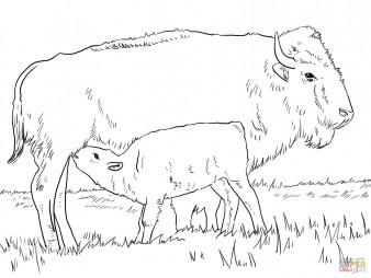 Американский бизон с тельцом