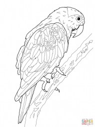 Попугай Серендак