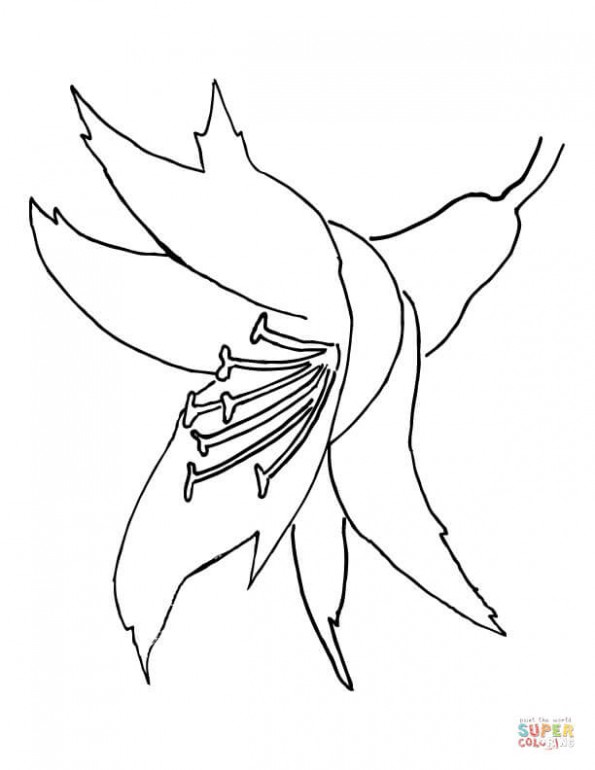 Раскраска Орхидея, распечатать или скачать из категории ...