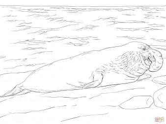 Морской слон на берегу