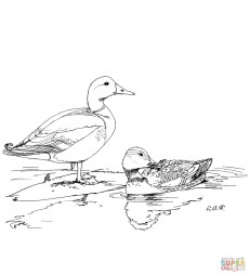 Две утки кряквы