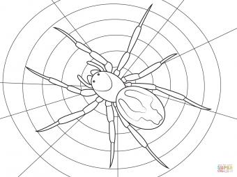 Паук-амауробид