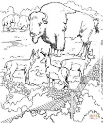Злой бык в зоопарке