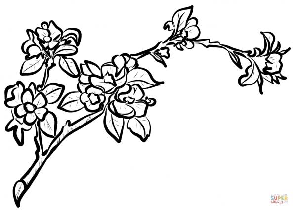 Раскраска Ветка цветущей яблони, распечатать или скачать ...