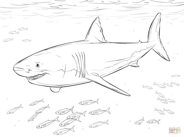 Раскраска Большая белая акула, распечатать или скачать из ...