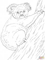 Коала, залезающая на дерево