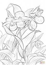 Розово-белые башмачки Венеры