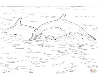 Дельфин-белобочка