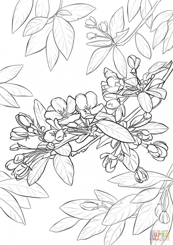 Раскраска Цвет яблони, распечатать или скачать из ...