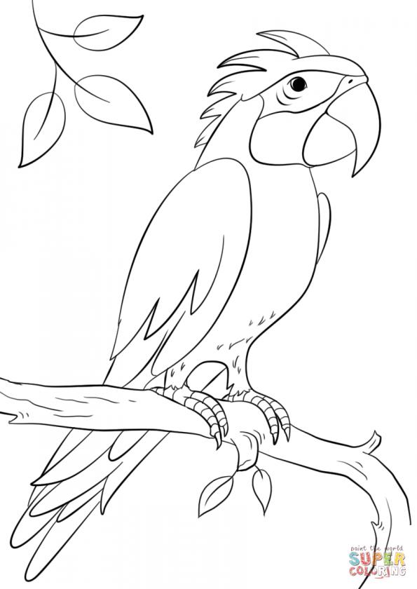 составил попугай ара раскраска распечатать лера кудрявцева, вслед