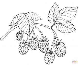 Красная малина