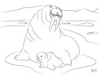 Морж и его детеныш