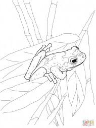 Зеленоглазая древесная лягушка